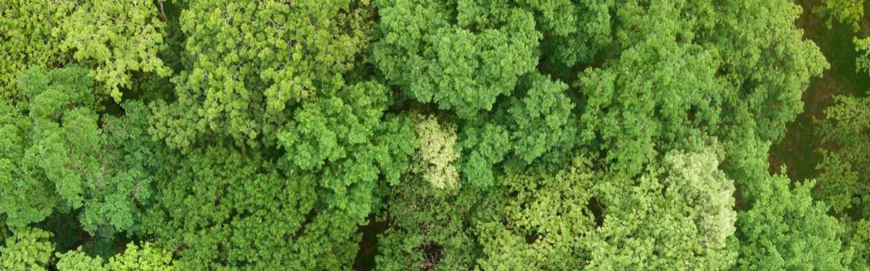 Imagem mostrando várias árvore de cima com um rio, em tons fortes | La Roche-Posay